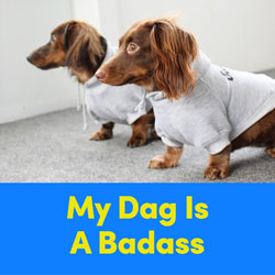 My Dog is a Badass