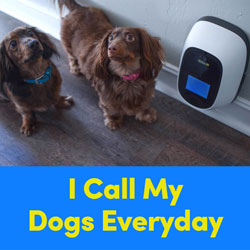 I Call My Dogs Everyday
