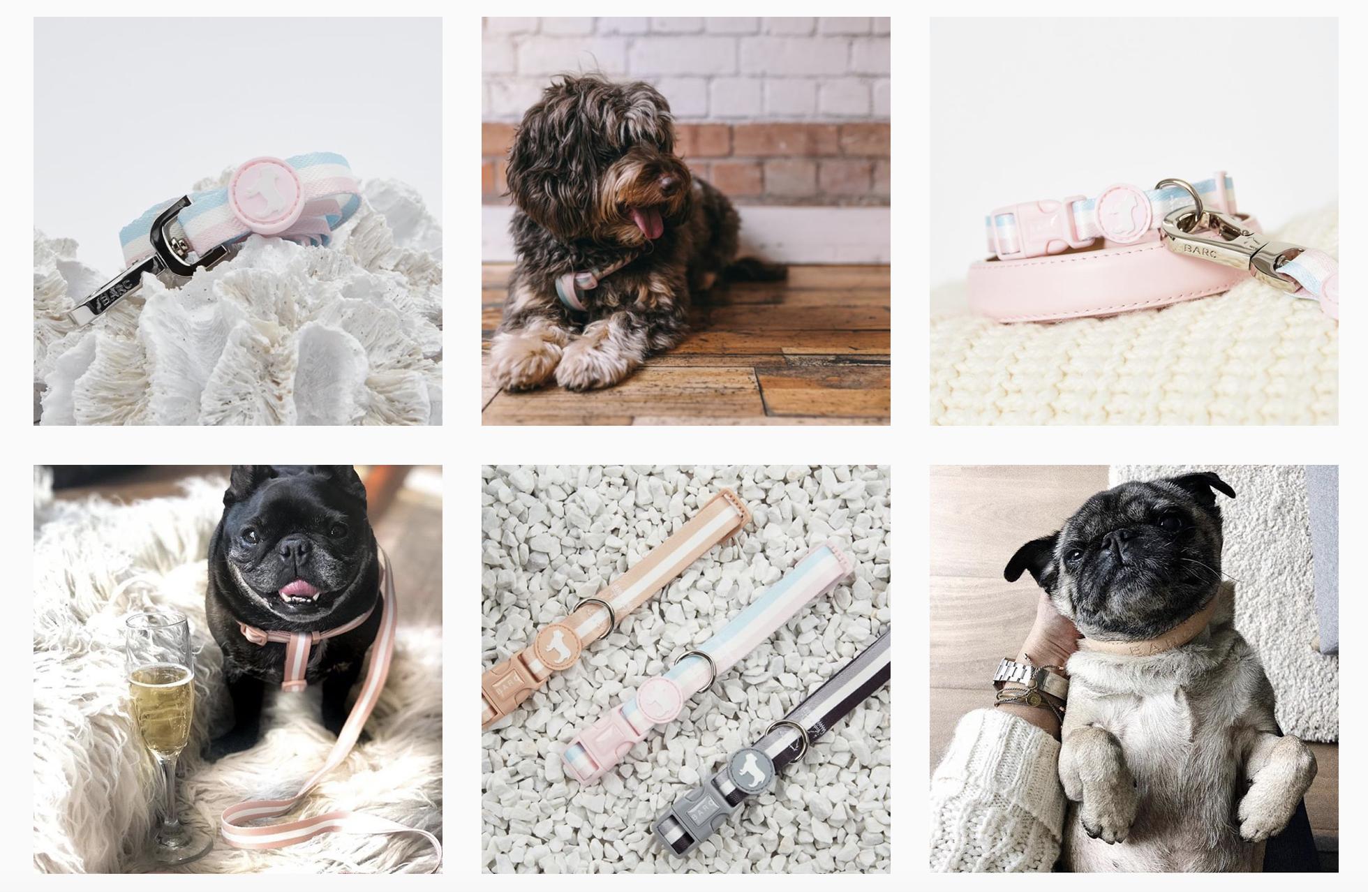 photos of pugs