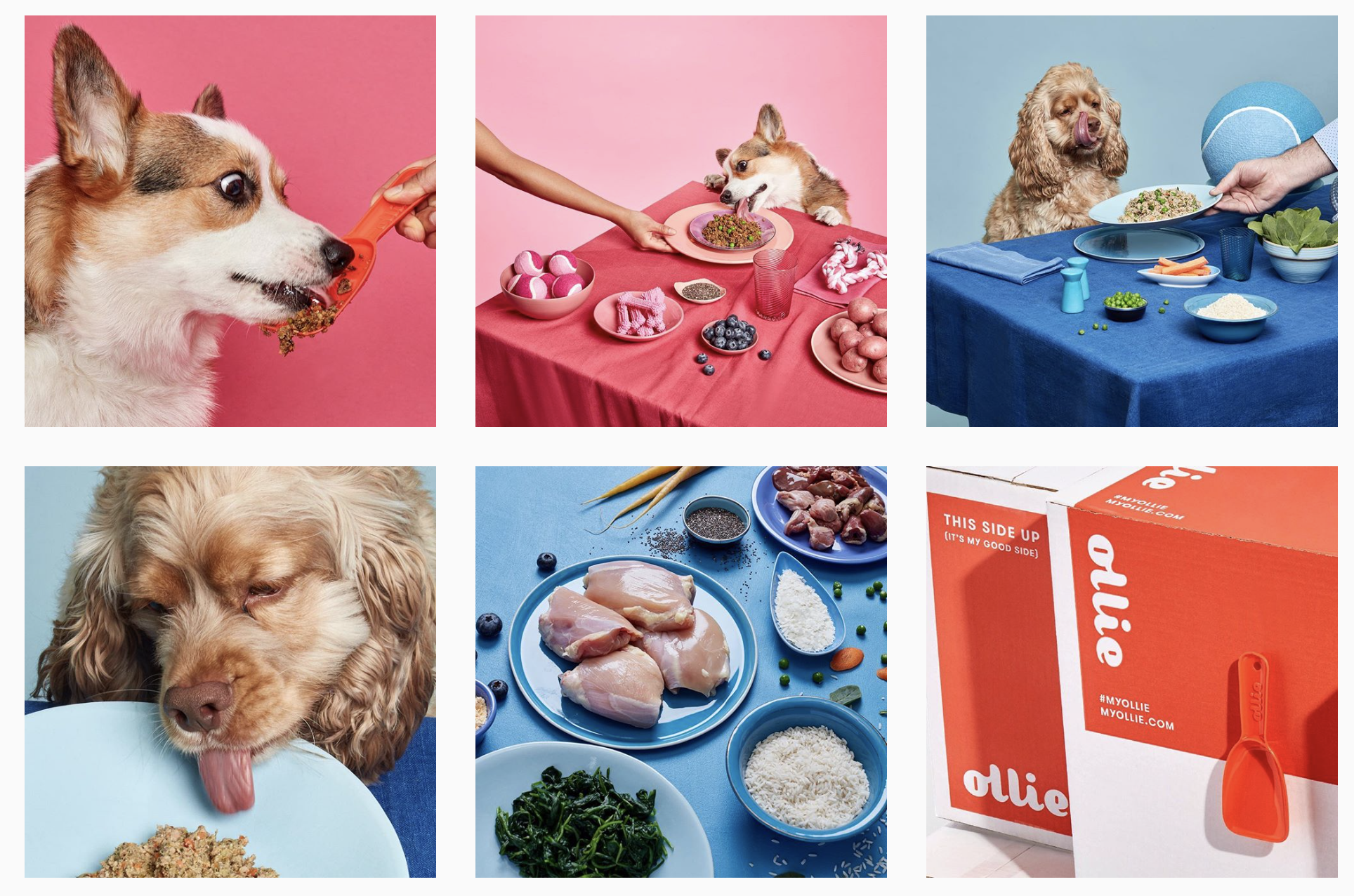pictures of dogs eating food