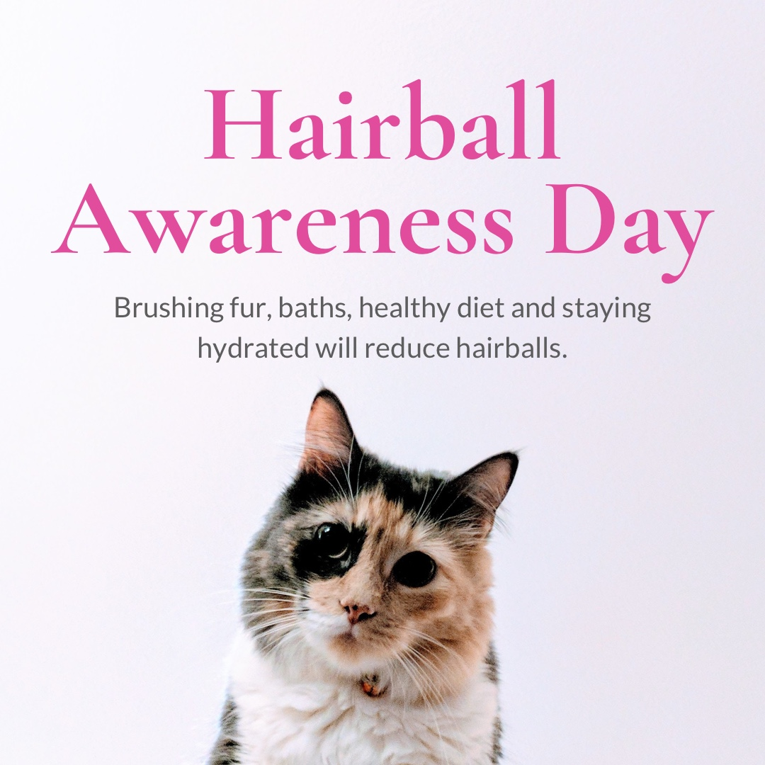 April 26th Hairball Awareness Day