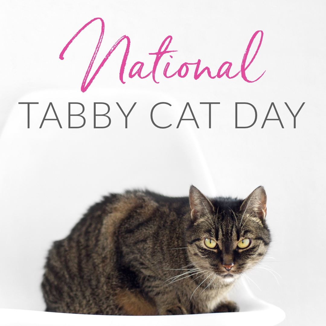 April 30th National Tabby Day