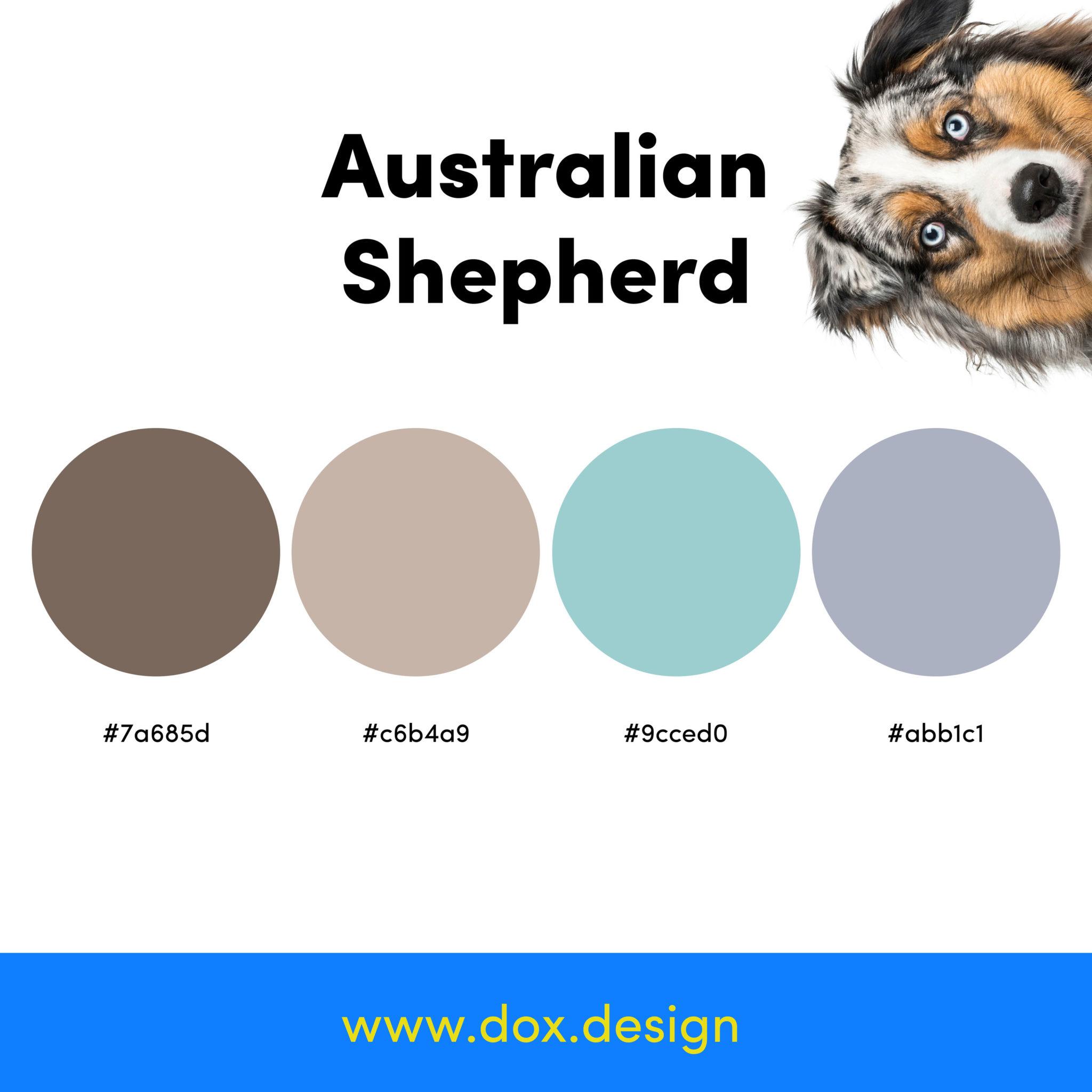 australian shepherd color palette