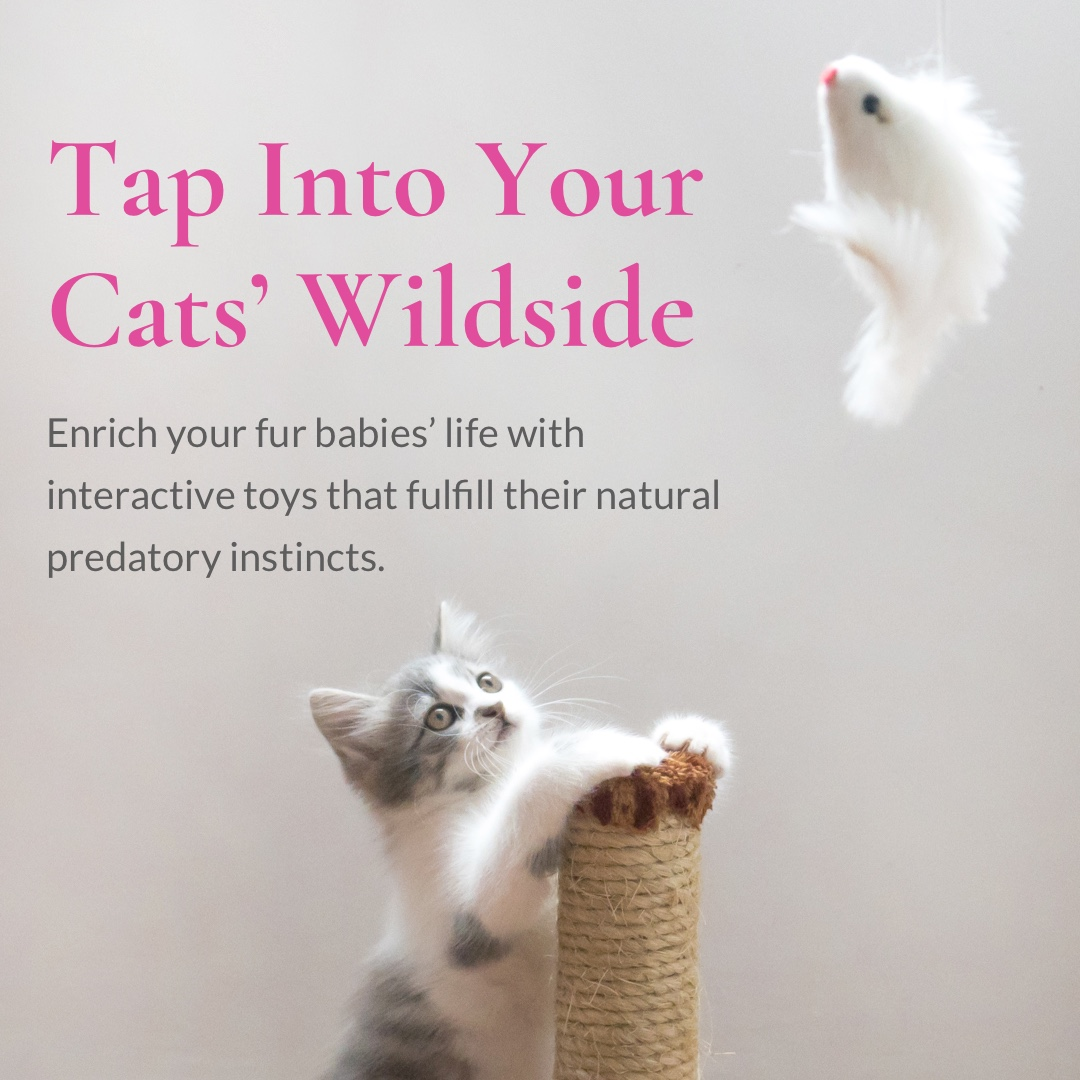 Cats Wildside