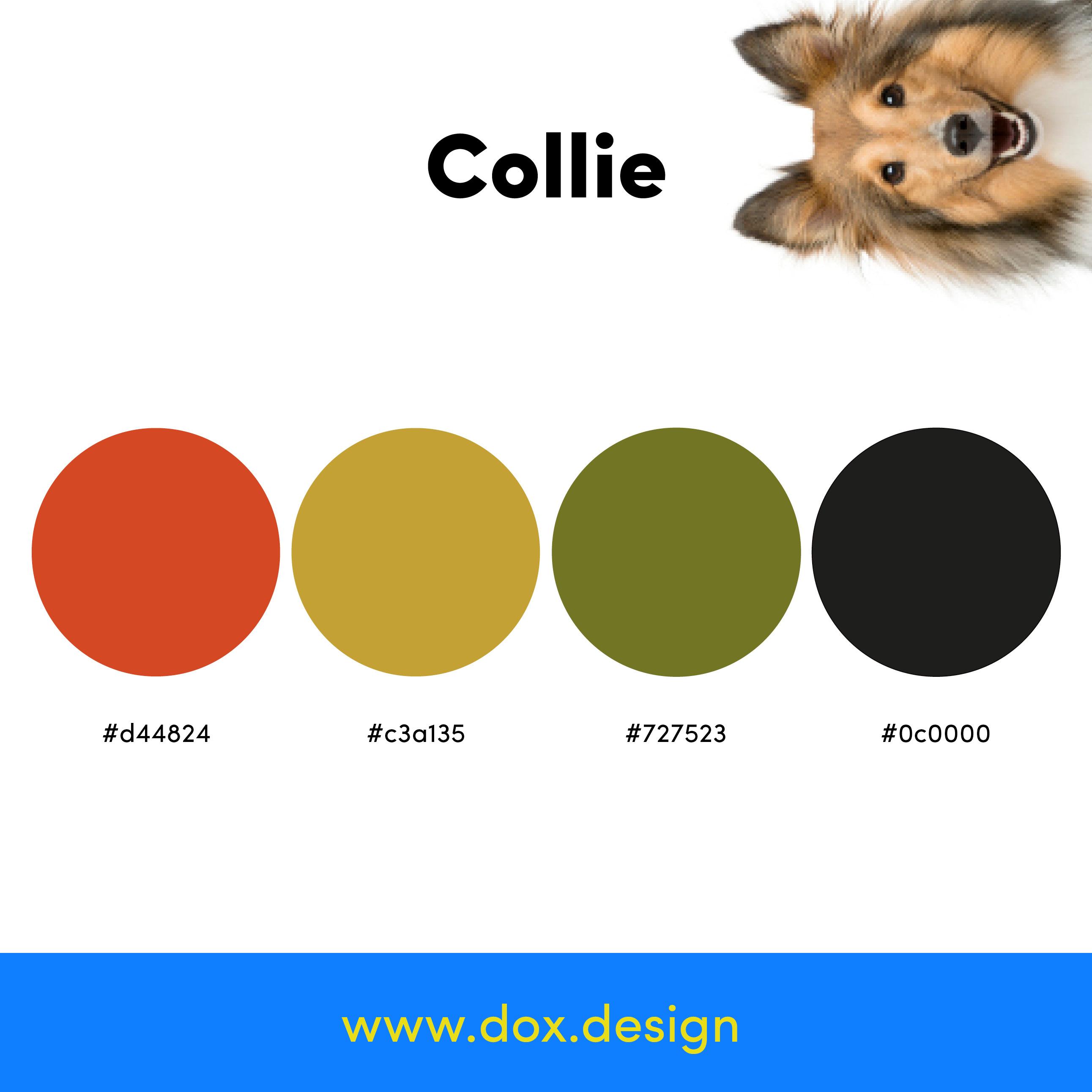Collie color palette