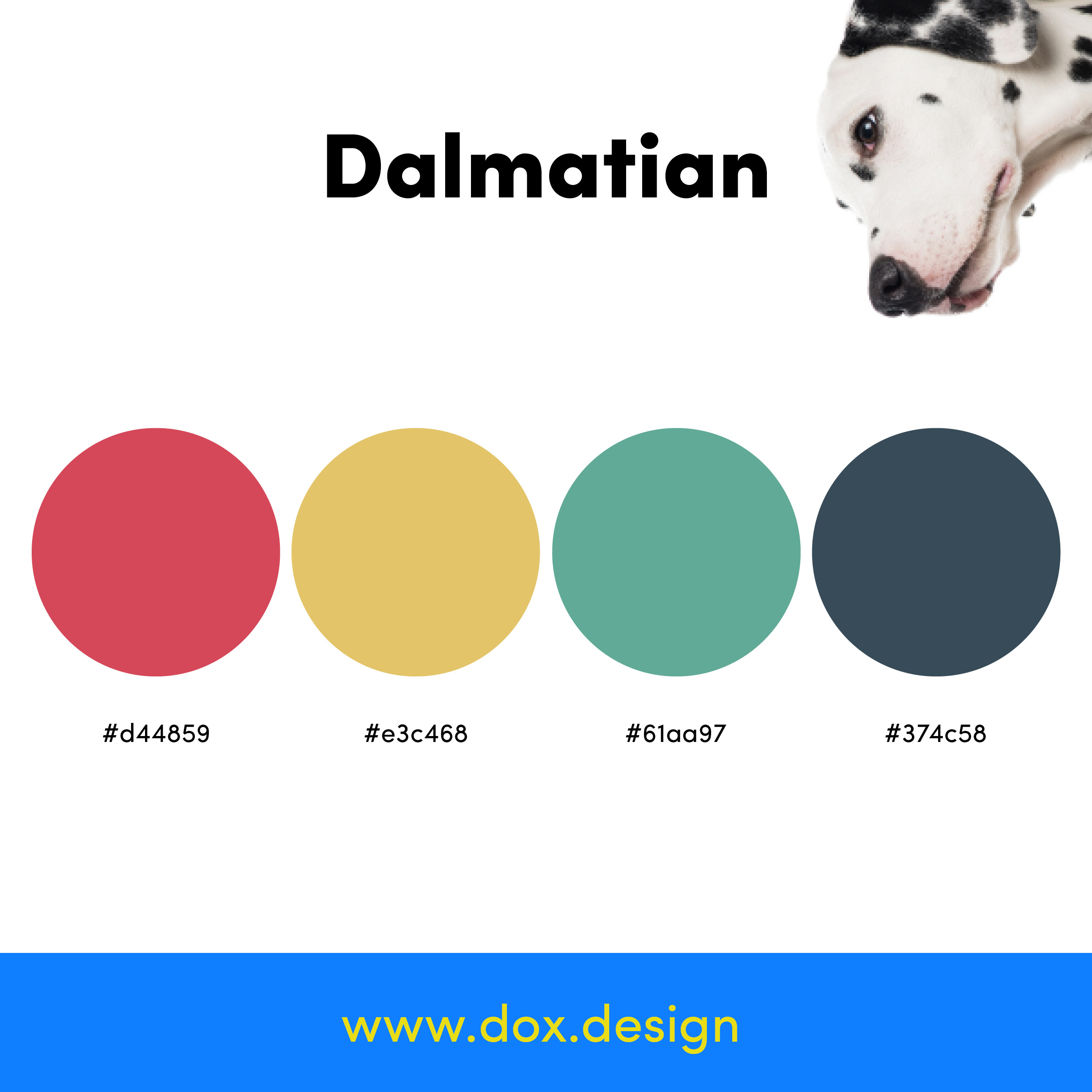 Dalmation color palette