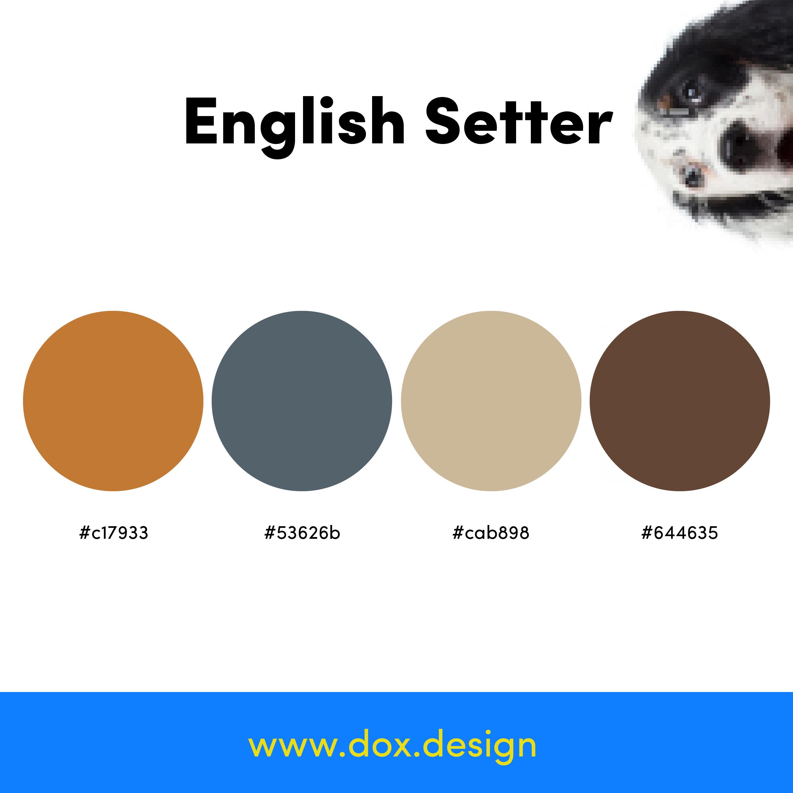 English Setter color palette