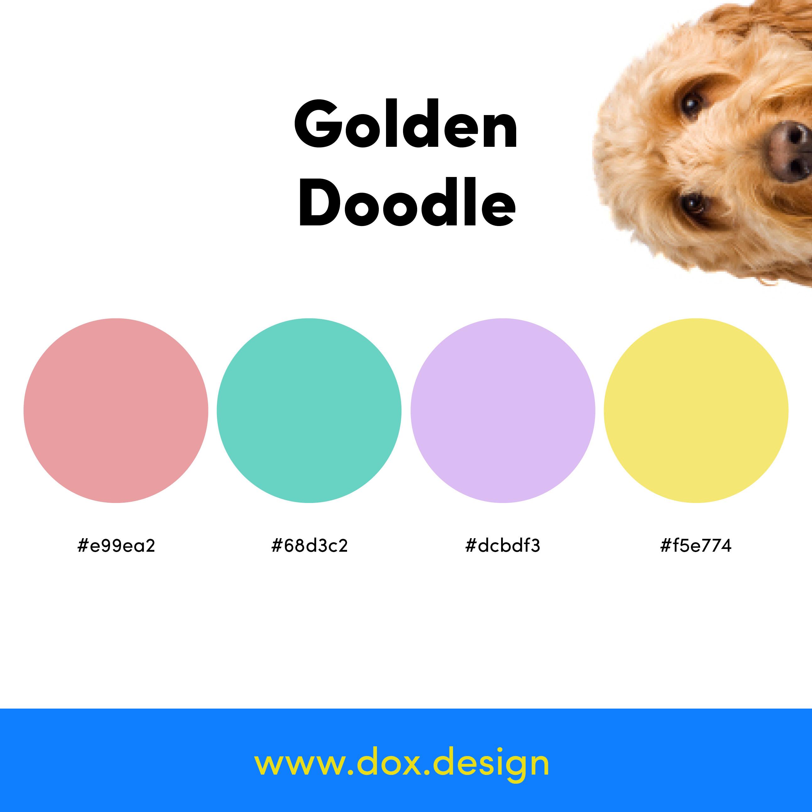 Golden Doodle color palette