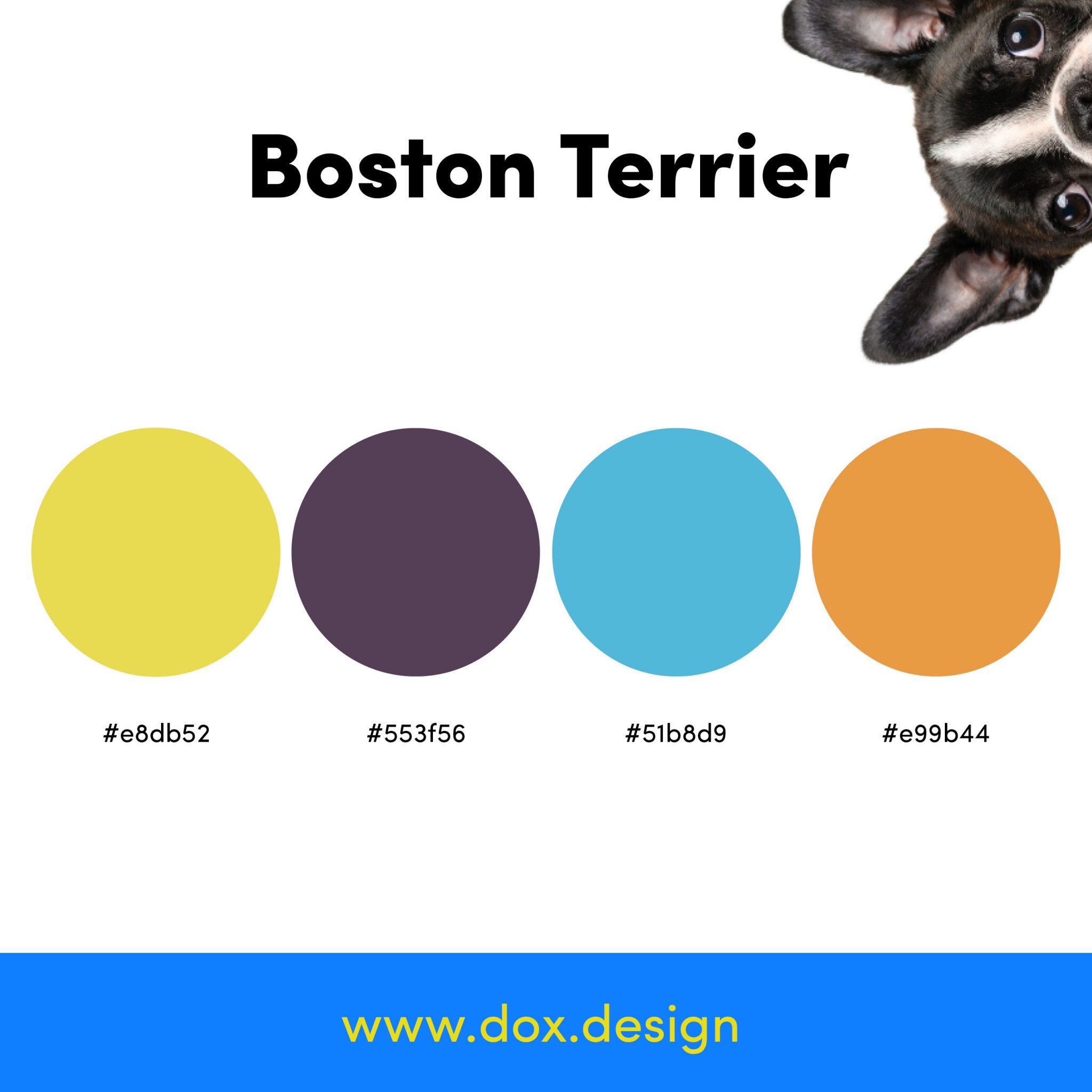Boston Terrier color palette