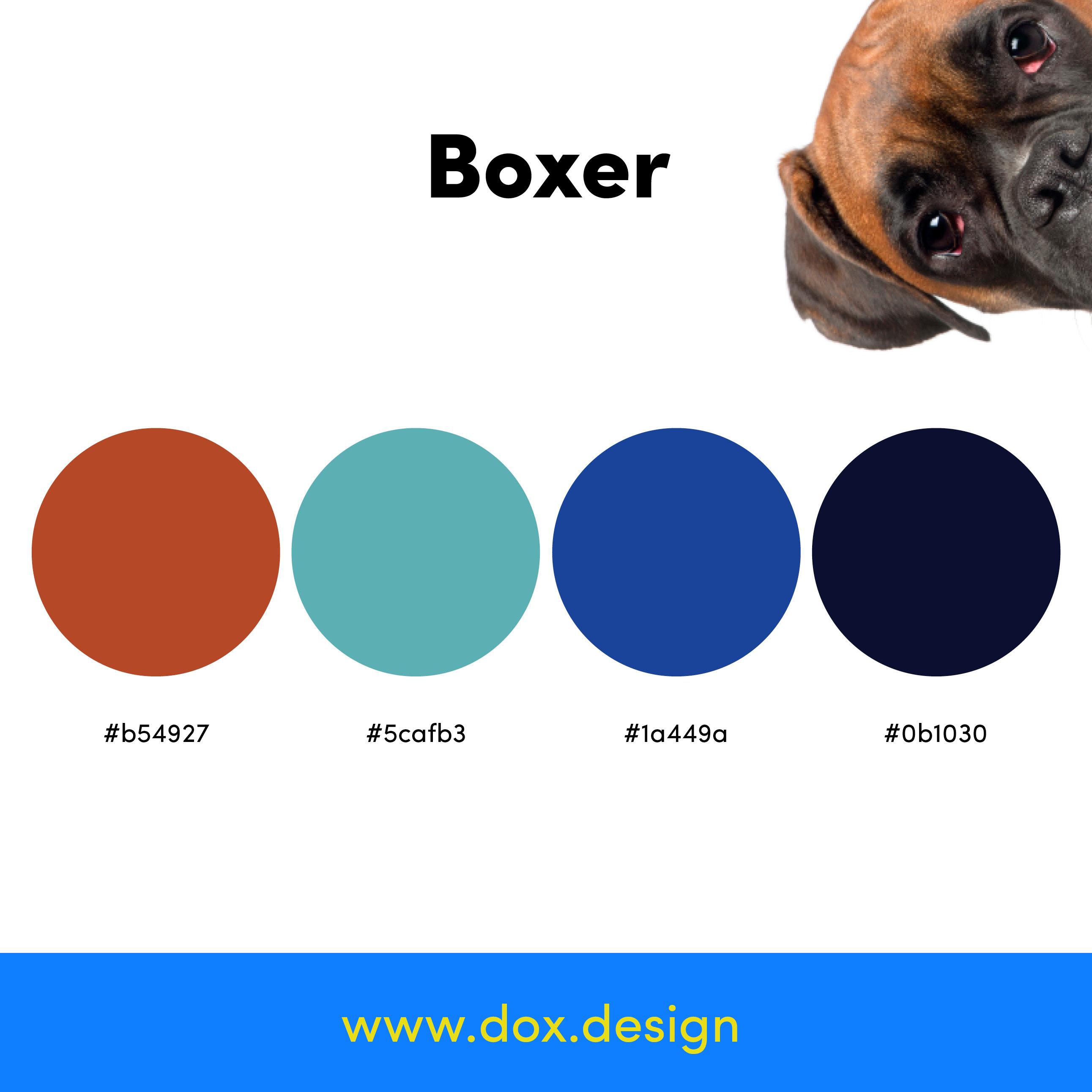 Boxer color palette