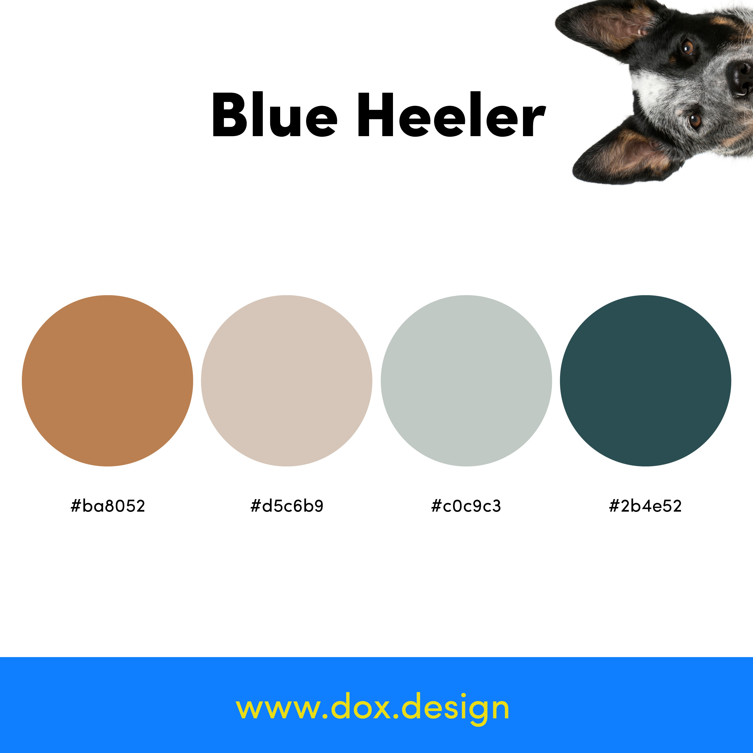 Blue Heeler color palette