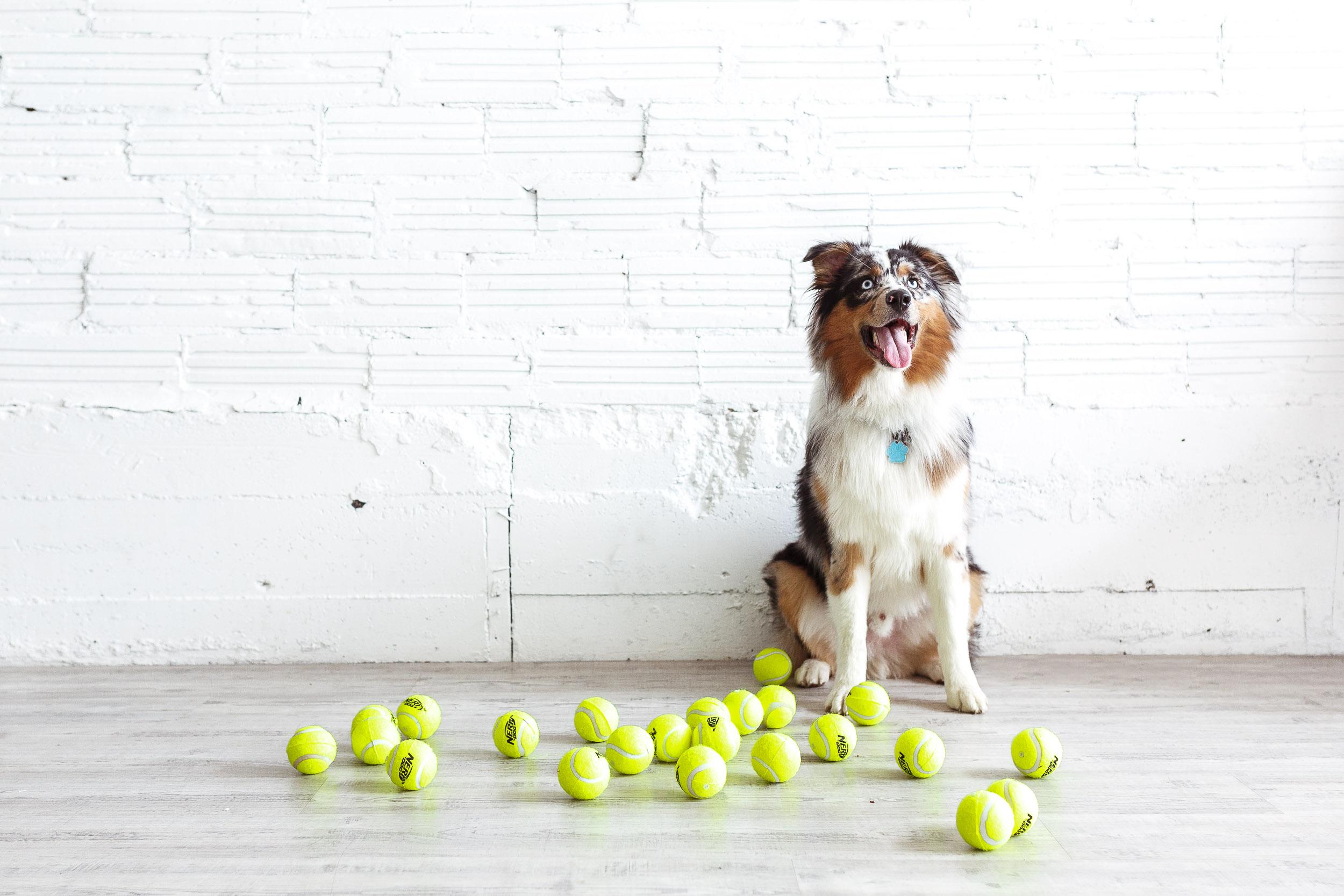 dog sitting next to tennis balls