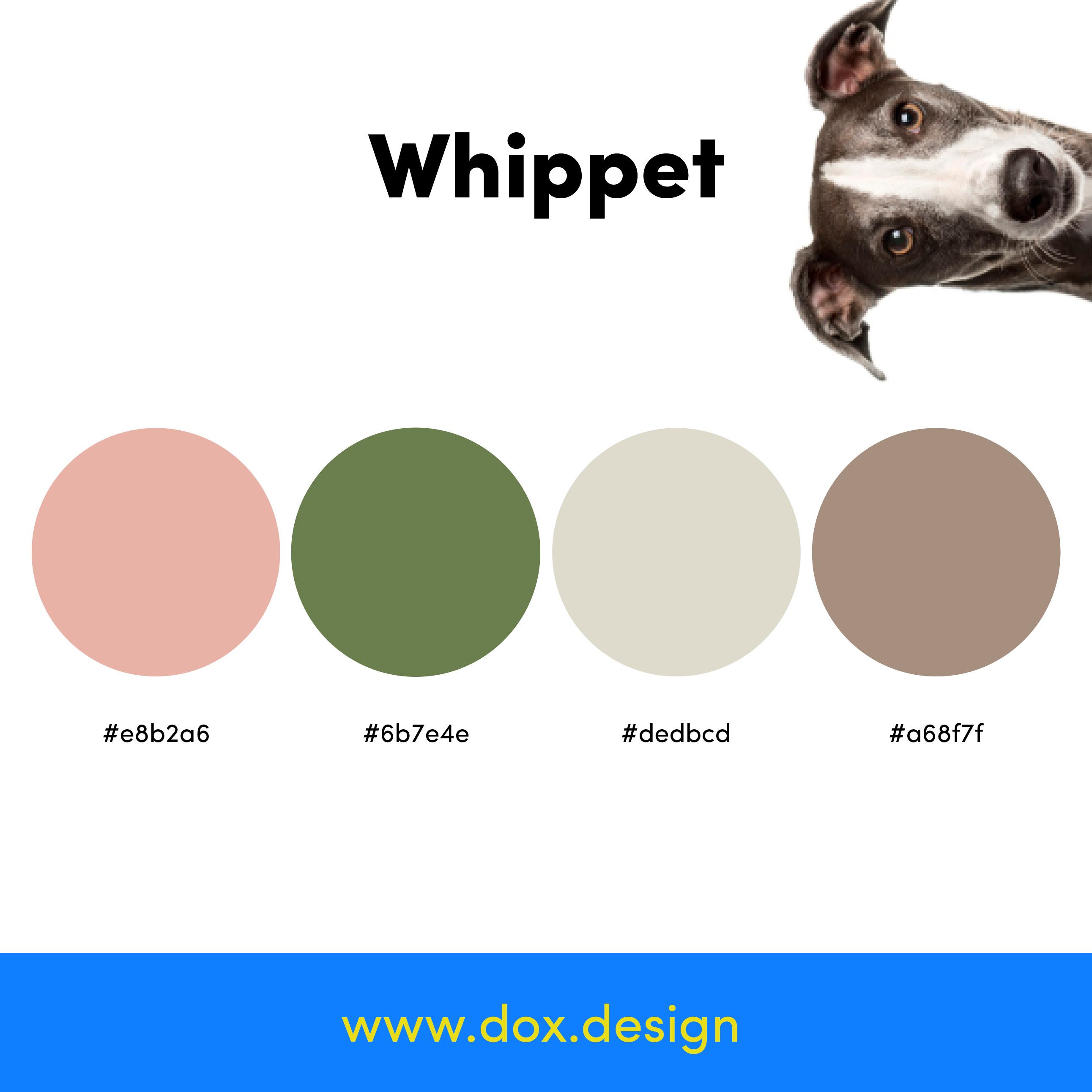 Whippet color palette