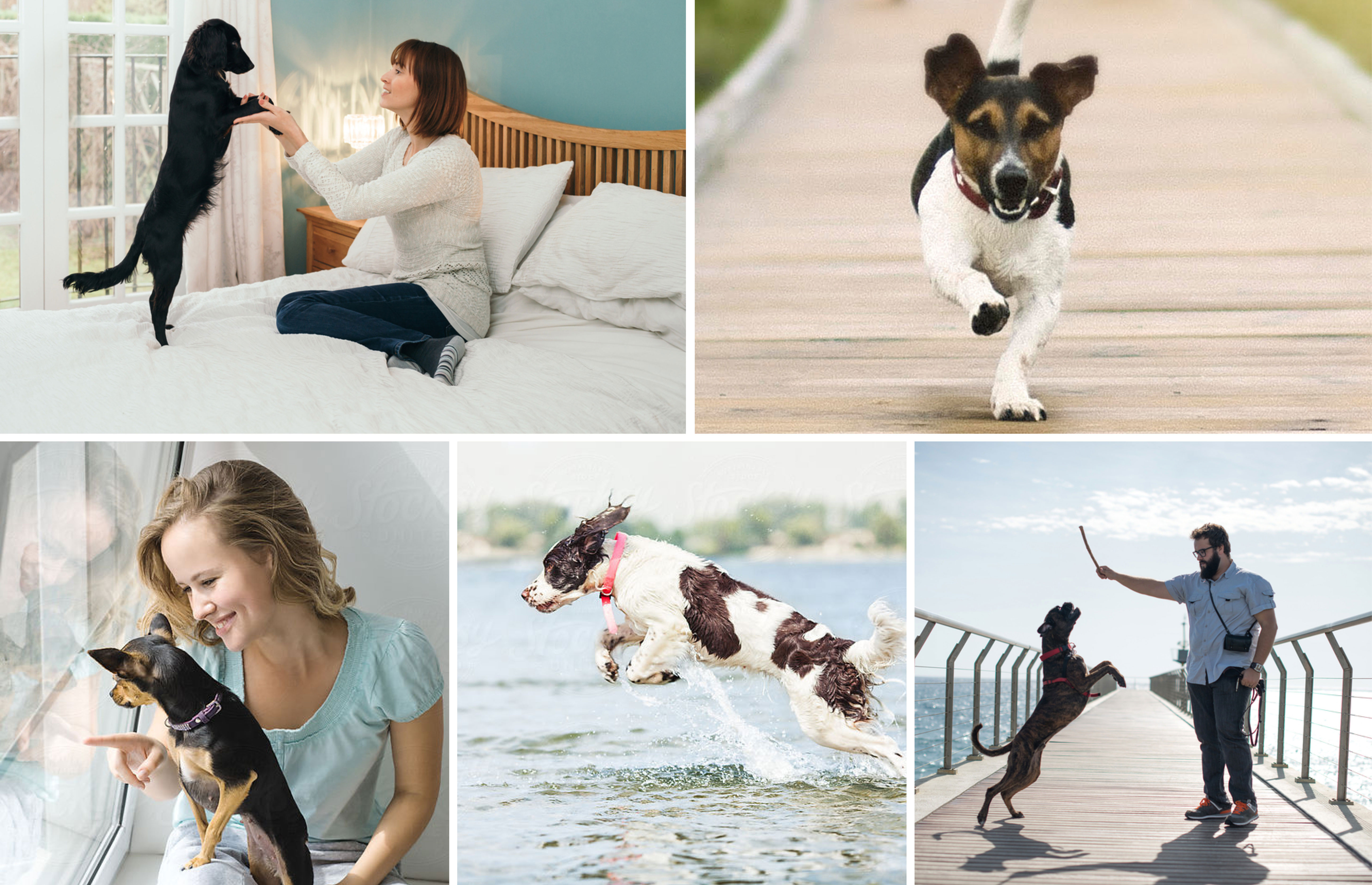 photos of dogs in action