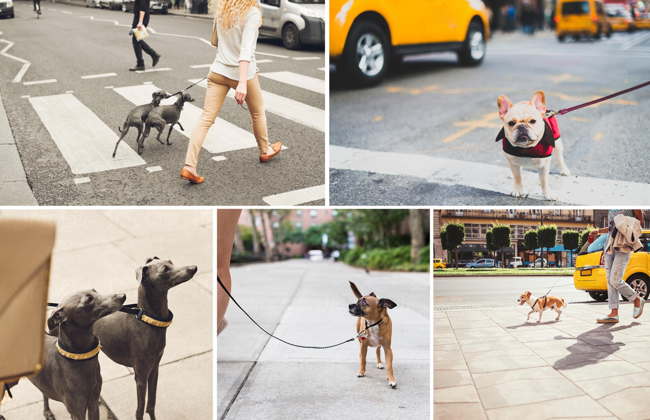 grid of dog photos
