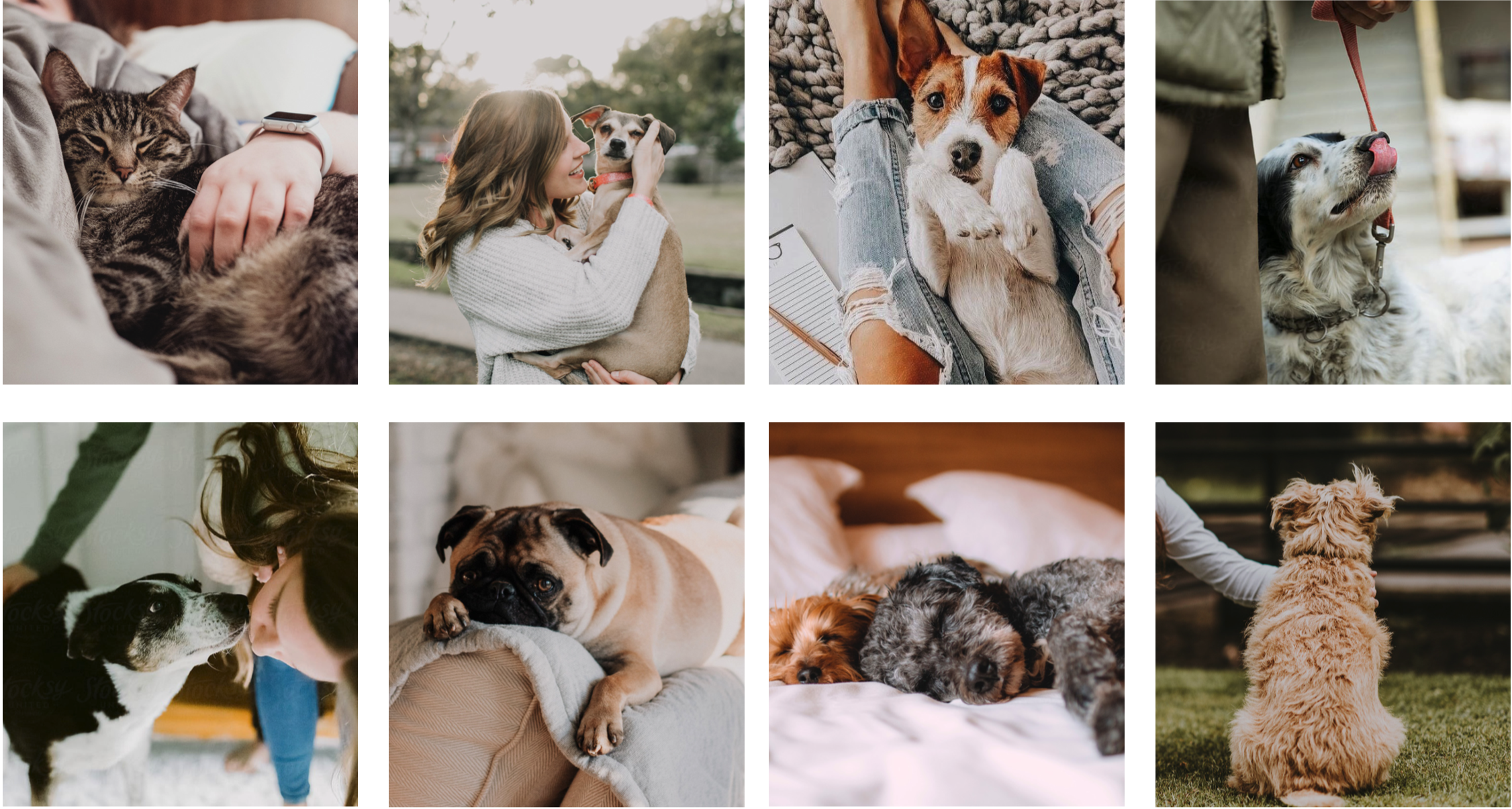 grid of photos of small dogs