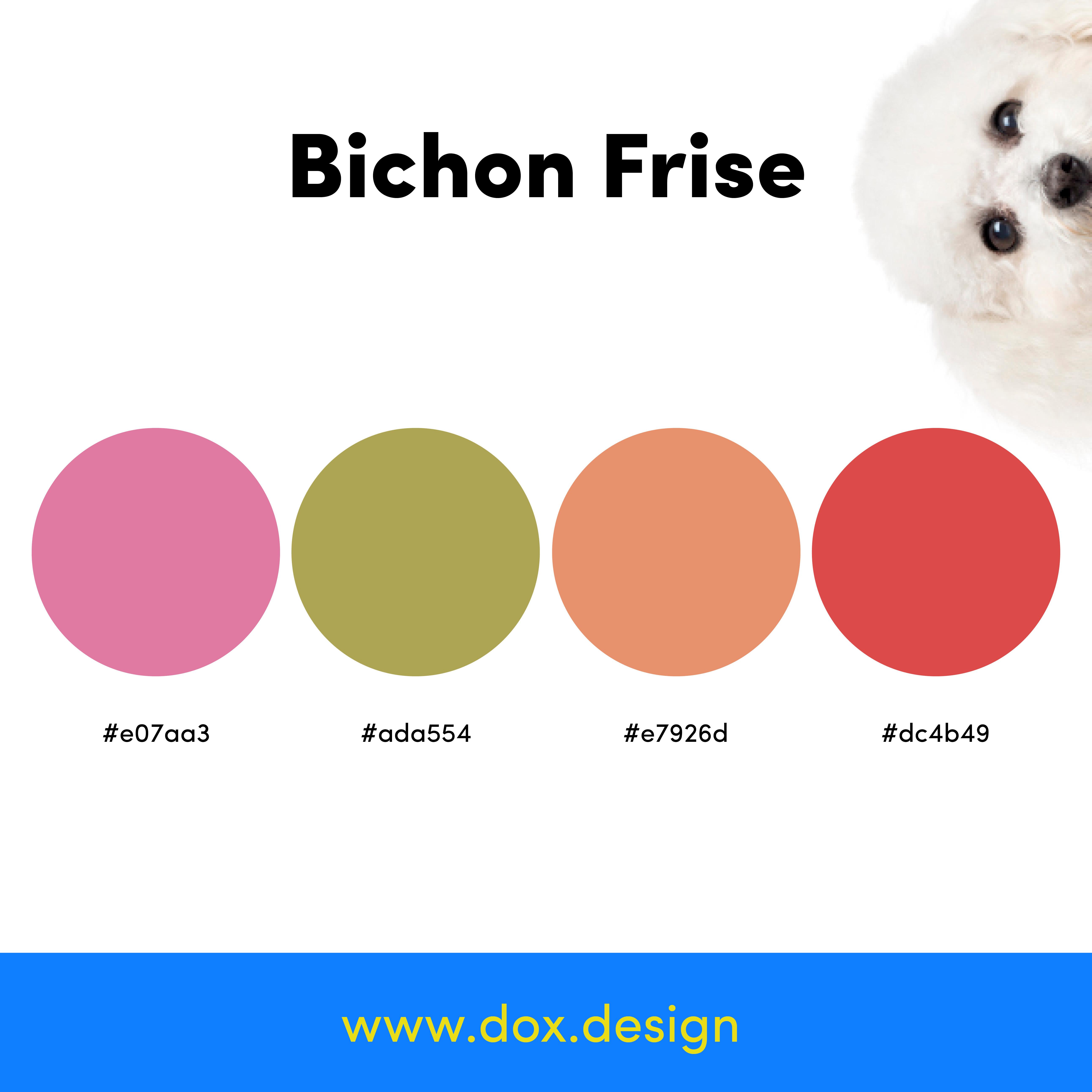 Bichon Frise color palette