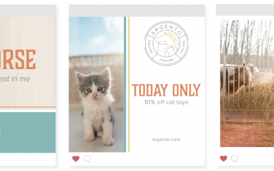How To Successfully DIY Your Pet Brand Part 4: Brand Elements & Social Media