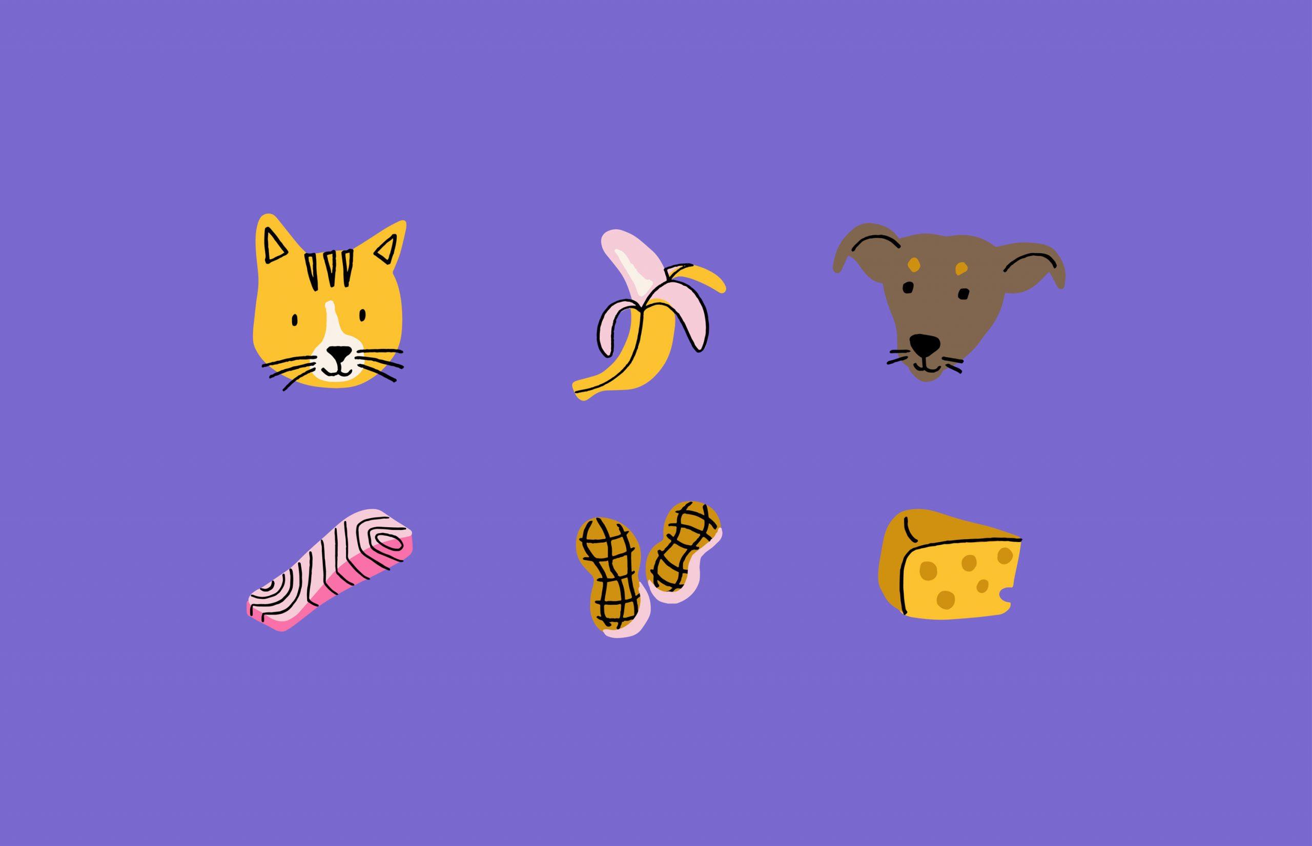 dog icon, cat icon, food icon